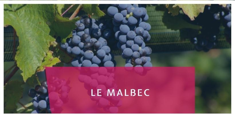 Le Malbec