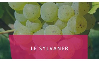 Le Sylvaner